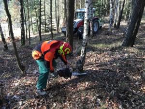Holzfäller bei der Arbeit